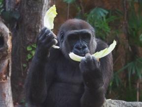 Yahoo!検索のみを使う異動社員の日常生活レポートvol.2~鉢植えカビ問題と動物園